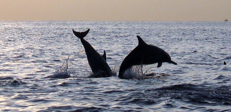 delfine das oben sind